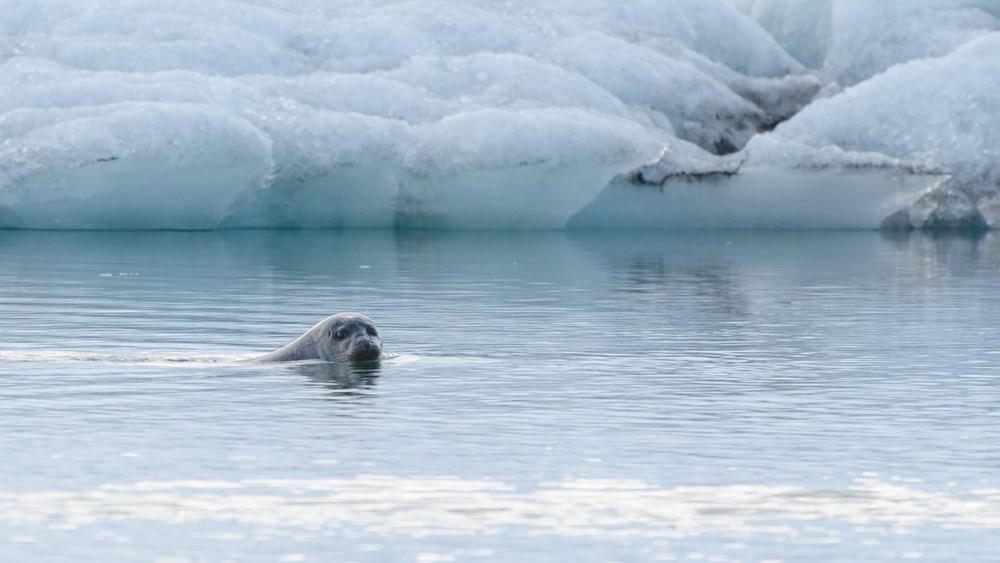 Kuzey Kutbu alarm veriyor: Arktik Buz Denizi zamanı gelmesine rağmen hala donmadı - 8