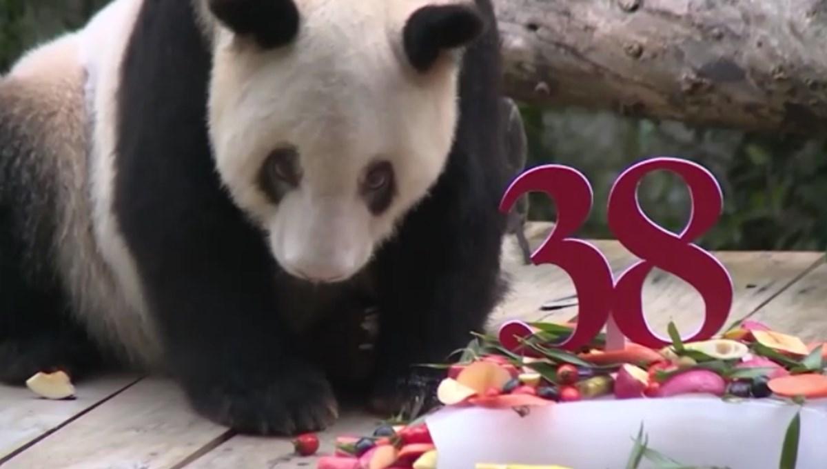 Dünyanın en yaşlı pandası 38 yaşına girdi