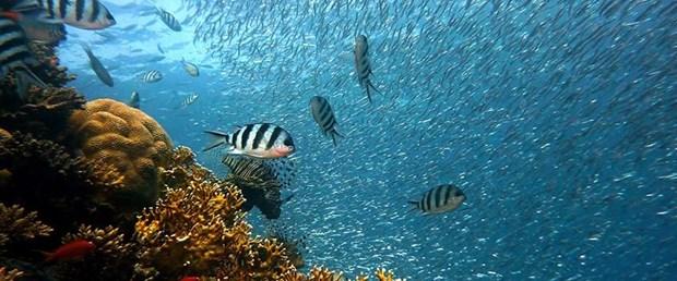 deniz-balık.jpg