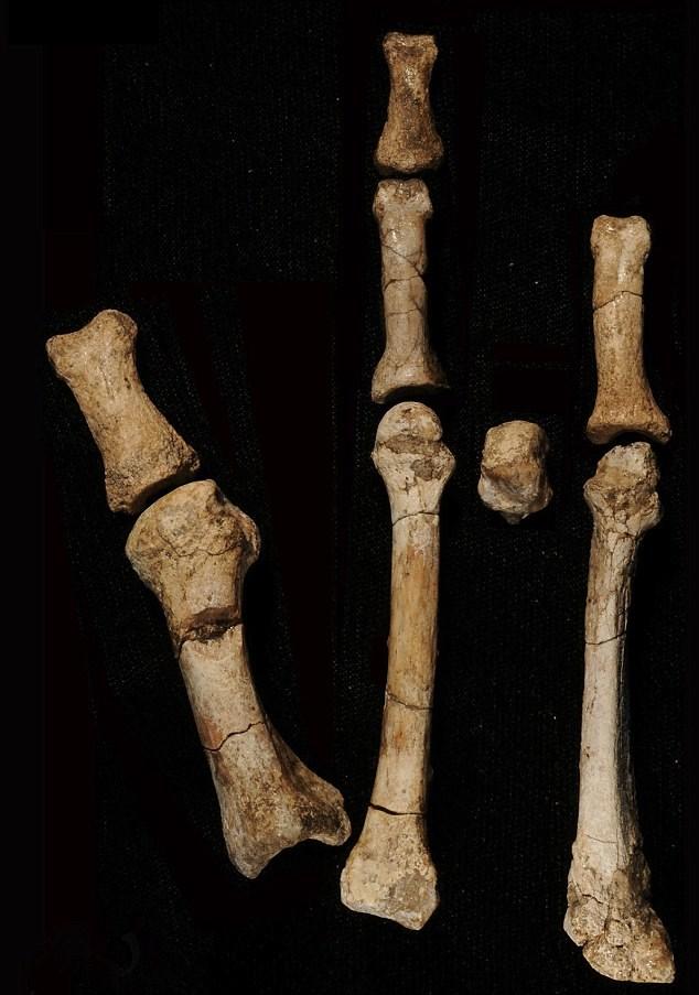3.4 milyon yıllık kemikler