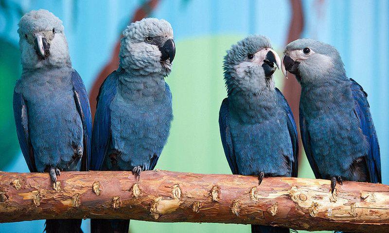 8 kuş türü18 yıldayok oldu | NTV