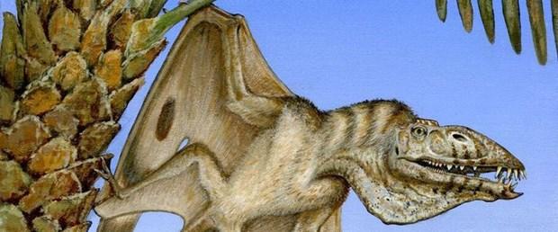 ABD'de yeni bir uçan dinozor türü keşfedildi