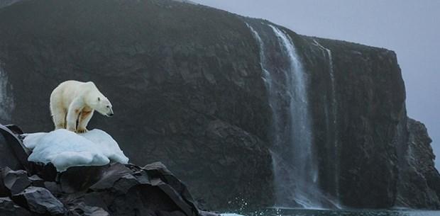 Antartika'daki erime alarm seviyesinde (25 yılda 3 trilyon ton buzul eridi)