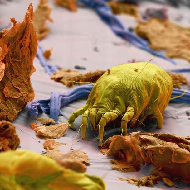 Aramızdaki mikro canavarlar