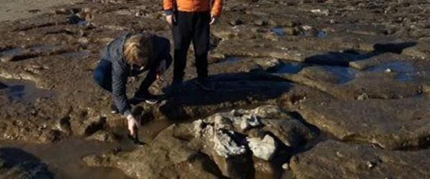 Arjantin'de 700 bin yıllık tembel hayvan fosili bulundu