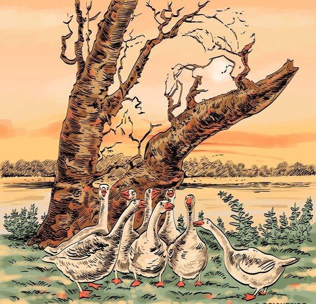 6. Kazları bekleyen tehlikeyi bulun