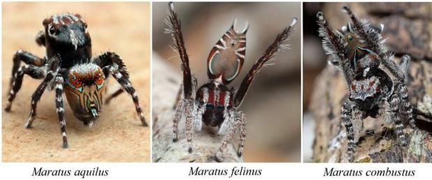yeni örümcek
