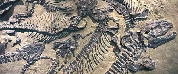 dinozor fosili kalıntıları.jpg