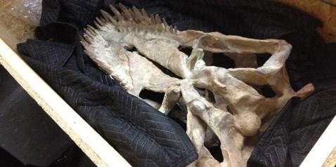 Dinozor iskeleti evine döndü