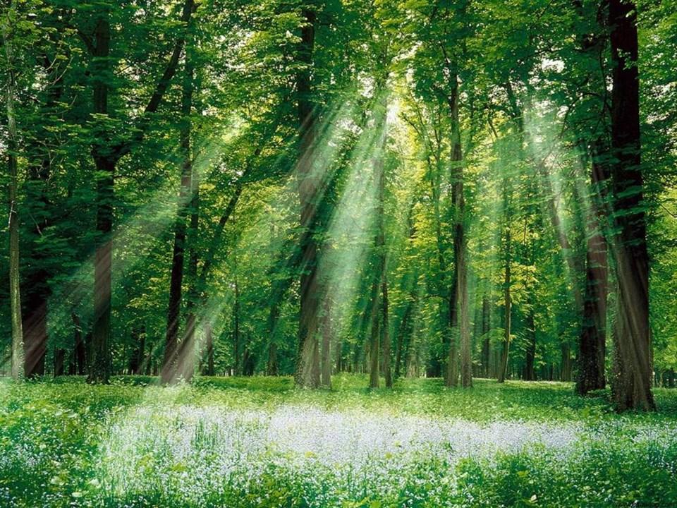 Yeryüzündeki oksijenin çoğunu üreten şey nedir?