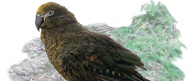 yeni zelanda papağan.jpg