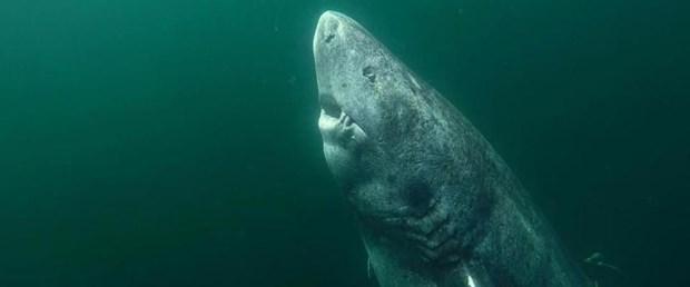 171214-en-yaşlı-köpekbalığı.jpg