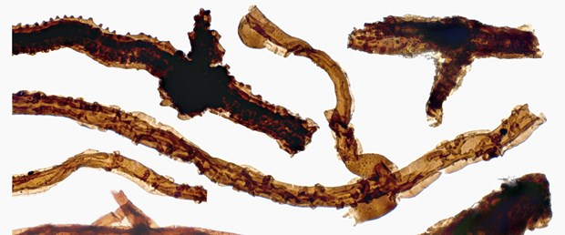 Tortotubus-filaments-Credit-Martin-R-Smith.png