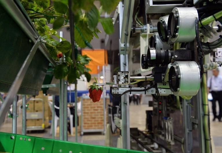 Japonların meyve toplama robotu