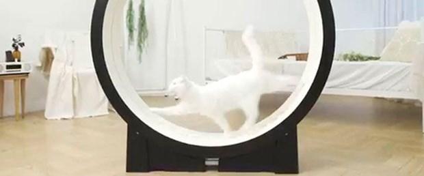 kedi-koşu.jpg