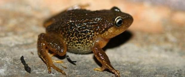 yellow-eyebrow-frog-afp_650x400_41457502147.jpg