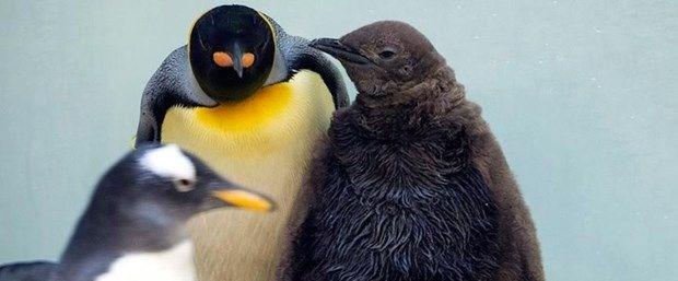 kral-penguen.jpg