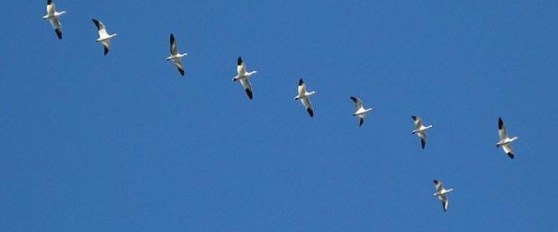 kuşlar küresel ısınma küçülme130516.jpg
