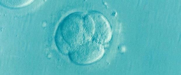 embriyo-tekno.jpg