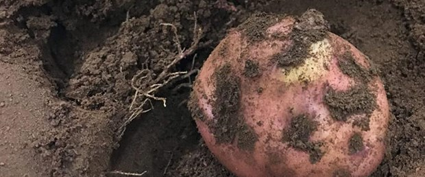mars-patates.jpg