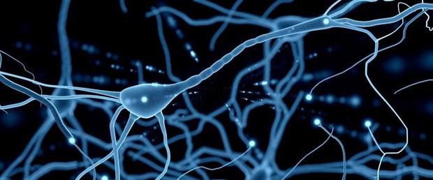 nöron.jpg