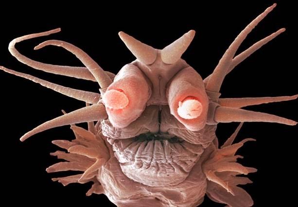 Okyanusların derinliklerinde yaşayan korkutucu canlılar