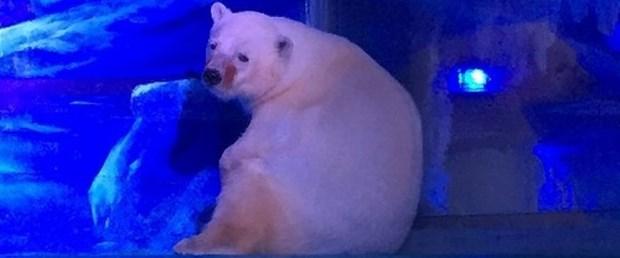 kutup ayısı.jpg