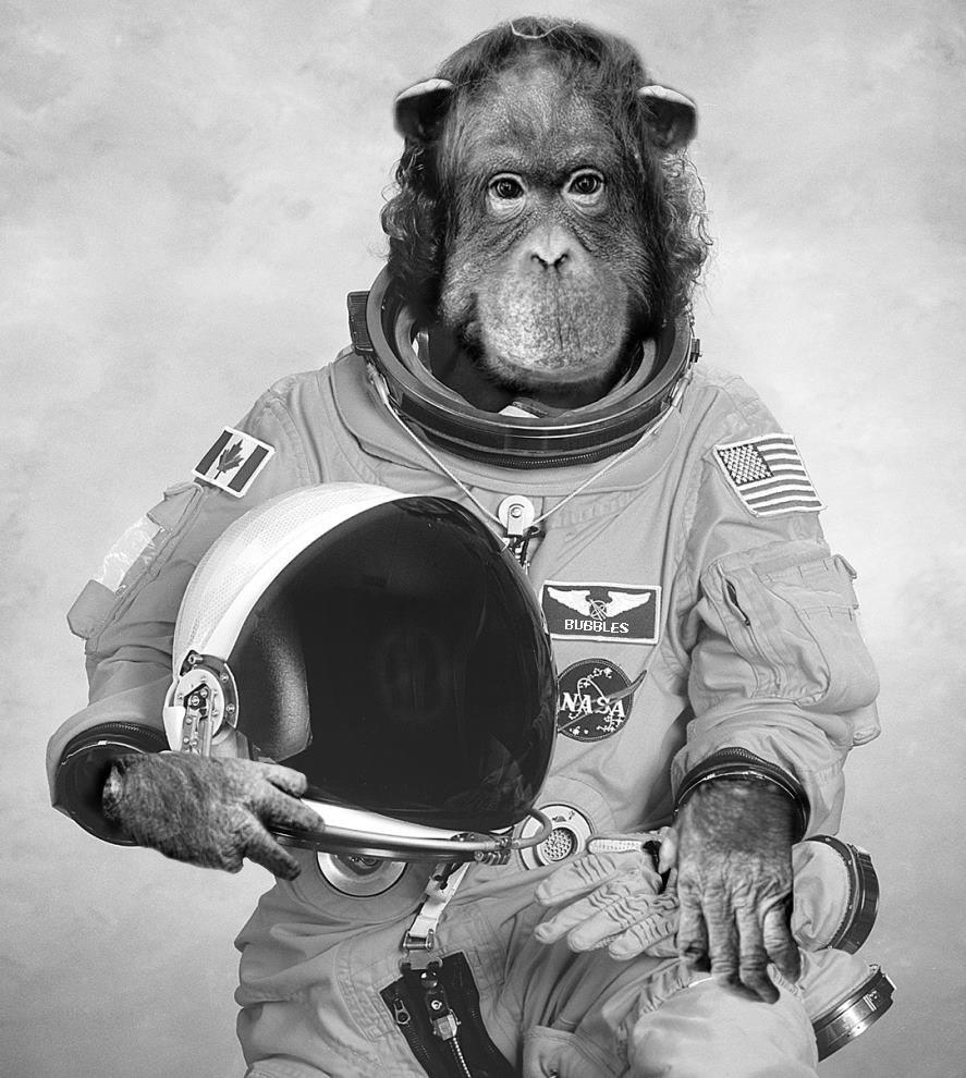 Uzaydaki ilk hayvan hangisidir?