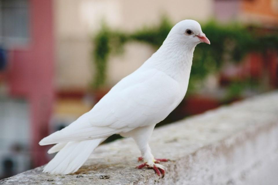 Güvercinler dokuza kadar sayabiliyor
