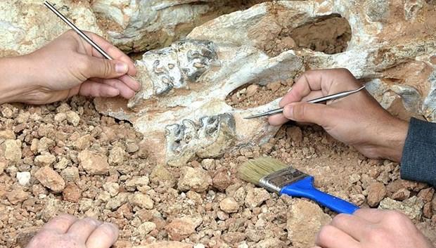 Son Afrika dinozoru'nun fosili bulundu