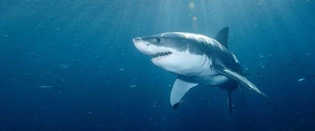 köpekbalığı-saldırı-09-02-15