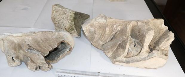 yozgat fosil.jpg