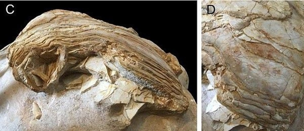 İngiltere'de 66 milyon yıllık balık fosili bulundu - 5