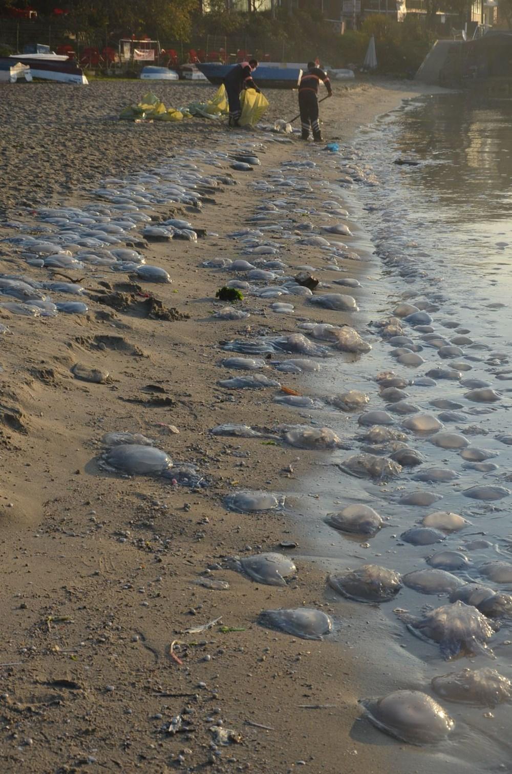 İstanbul'da korkutan dev denizanaları: Her biri en az bir kilo ağırlığında - 7