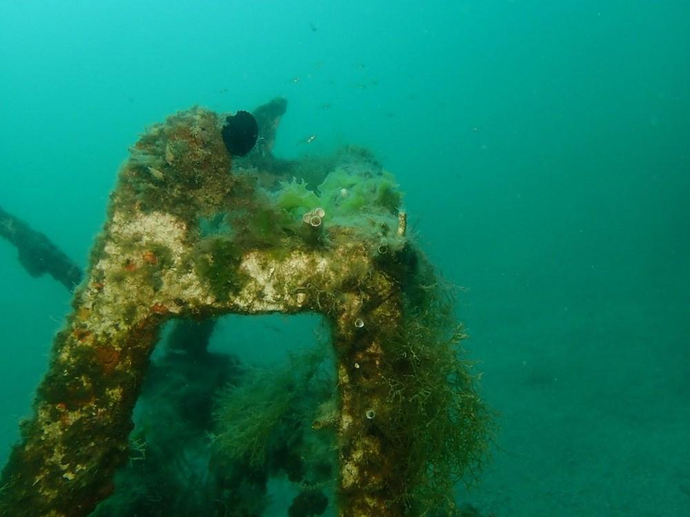 Mersin sahilleri müsilaj tehlikesi altında - 2