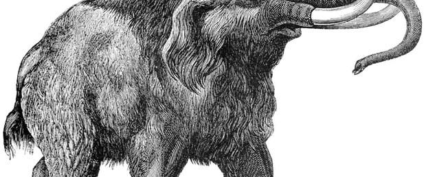 1 milyon yıllık mamut iskeleti