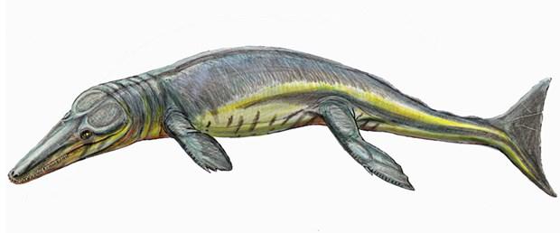 165 milyon yıllık fosil müzede bulundu