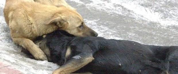 hayvan işkence.jpg