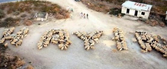 400 koyunla 'Hayır' dediler