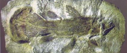 400 milyon yıl önce sudan çıkmış