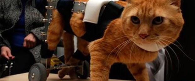 450 hayvana protez taktı
