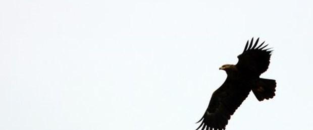 500 bin kuş Hatay'da