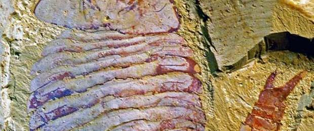 520 milyon yıllık beyin bulundu