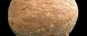65 milyon yıllık dinozor yumurtası