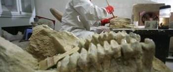 7 bin 600 fosillik dinozor şehri