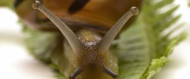 8 bin yıllık göçün sırrı salyangozlarda saklı