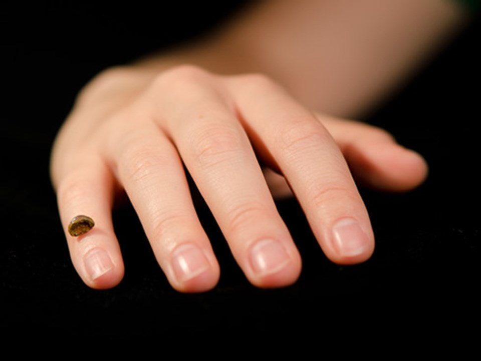 Denisovan insanına ait parmak kemiği fosili.