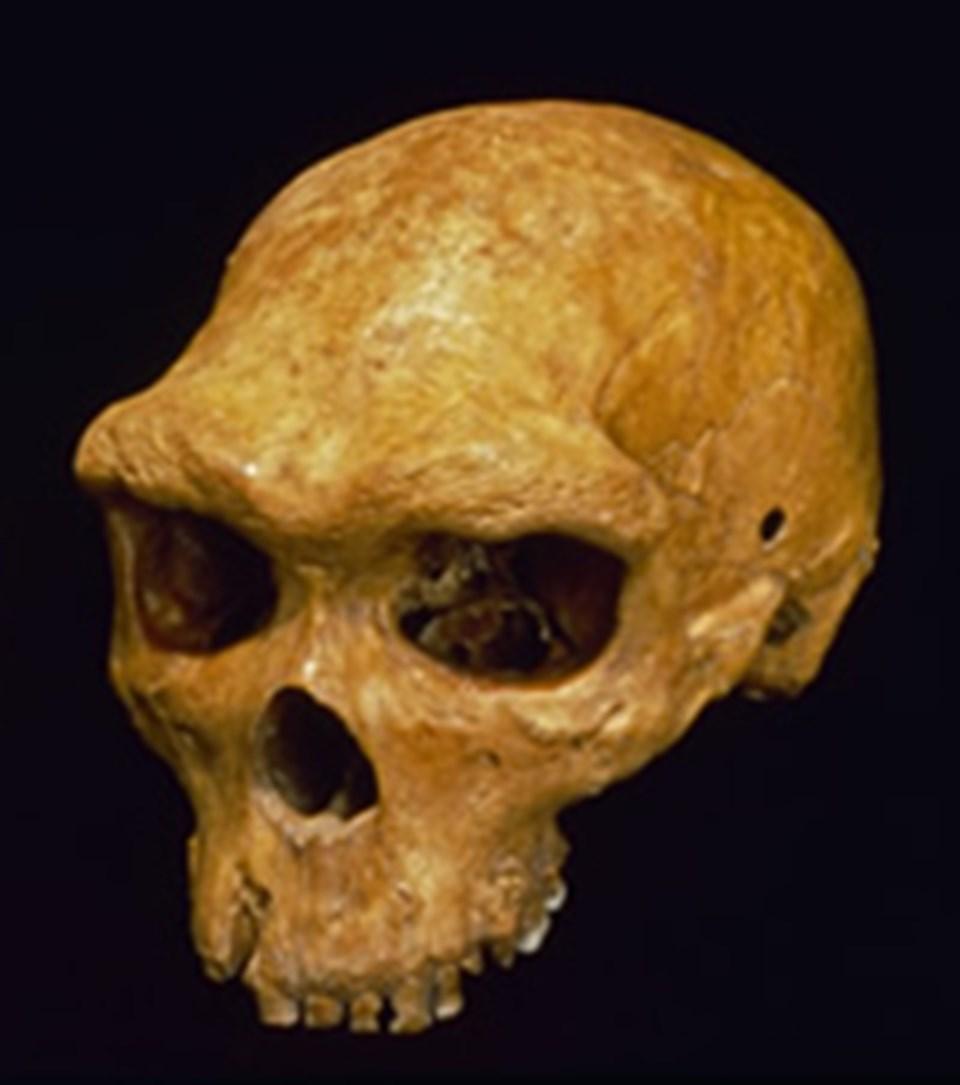 Denisovan'ın atası olduğu düşünülenHomo heidelbergensis.