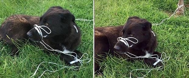 köpeğin ayağını ve ağzını bağladılar.jpg