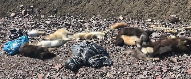 ankara-köpek-ölüm.jpg